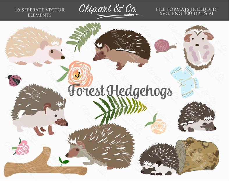 Hedgehog clipart woodland animals. Design elements forest vector