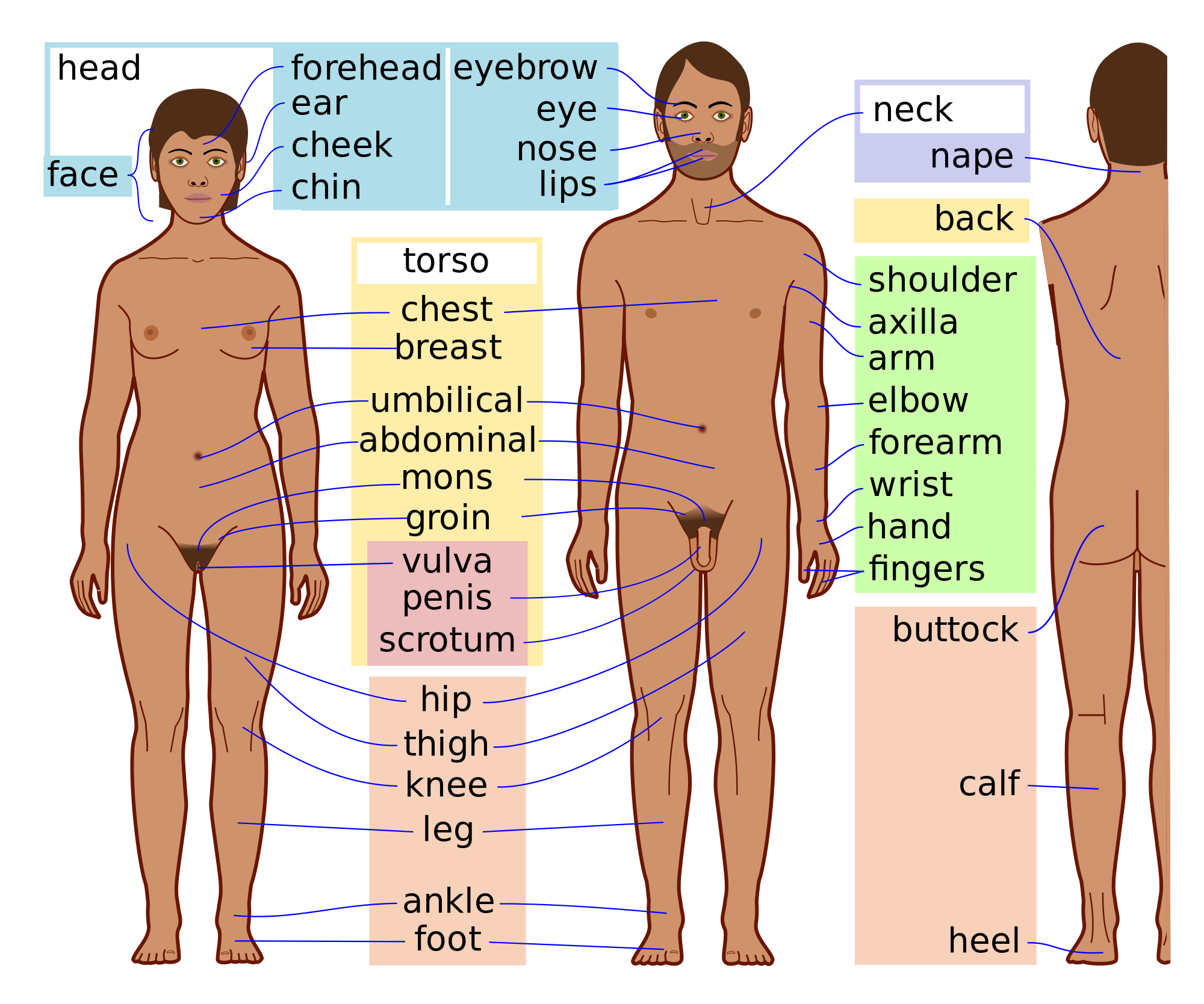 Nose clipart body part. Human parts external fosfe