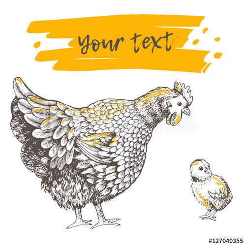 Illustration little chicken and. Hen clipart animal family