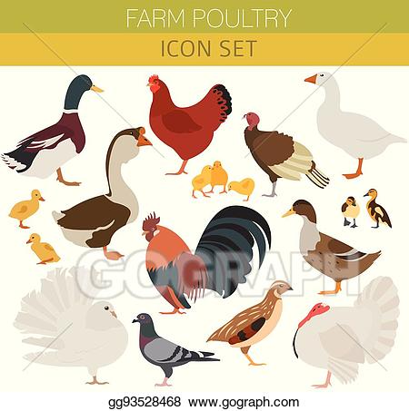 Vector poultry farming chicken. Hen clipart duck