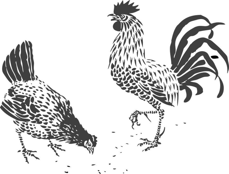 Image result for chicken. Hen clipart pencil sketch