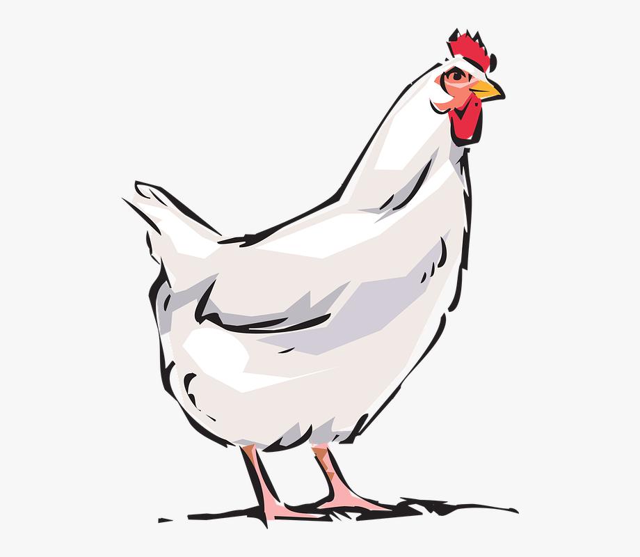 Hen clipart sad. Cock animal farm chicken