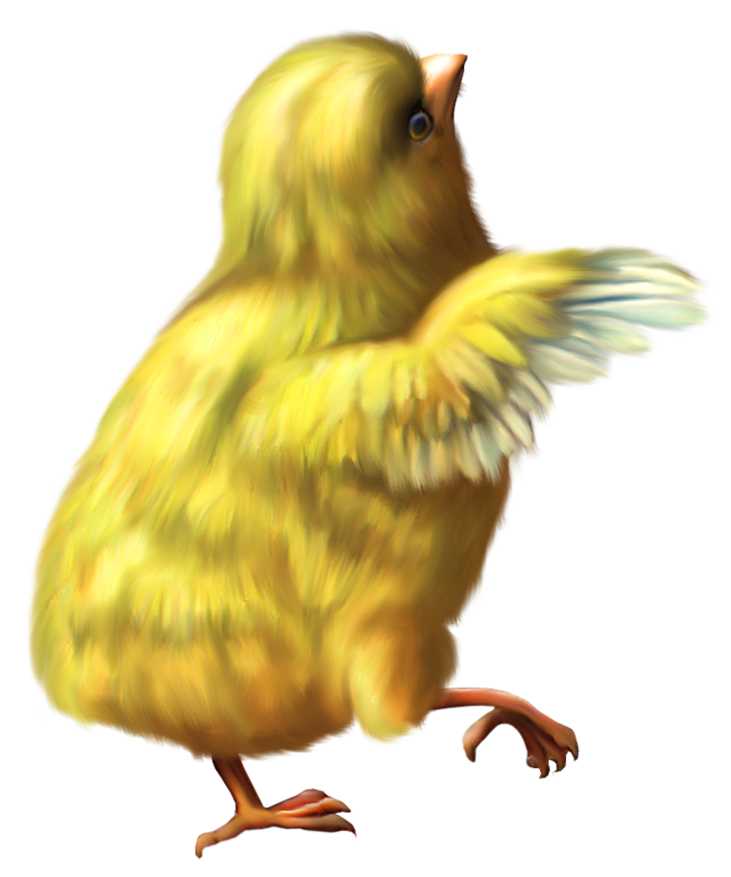 Pet clipart canary. Chicken transparent png pictures