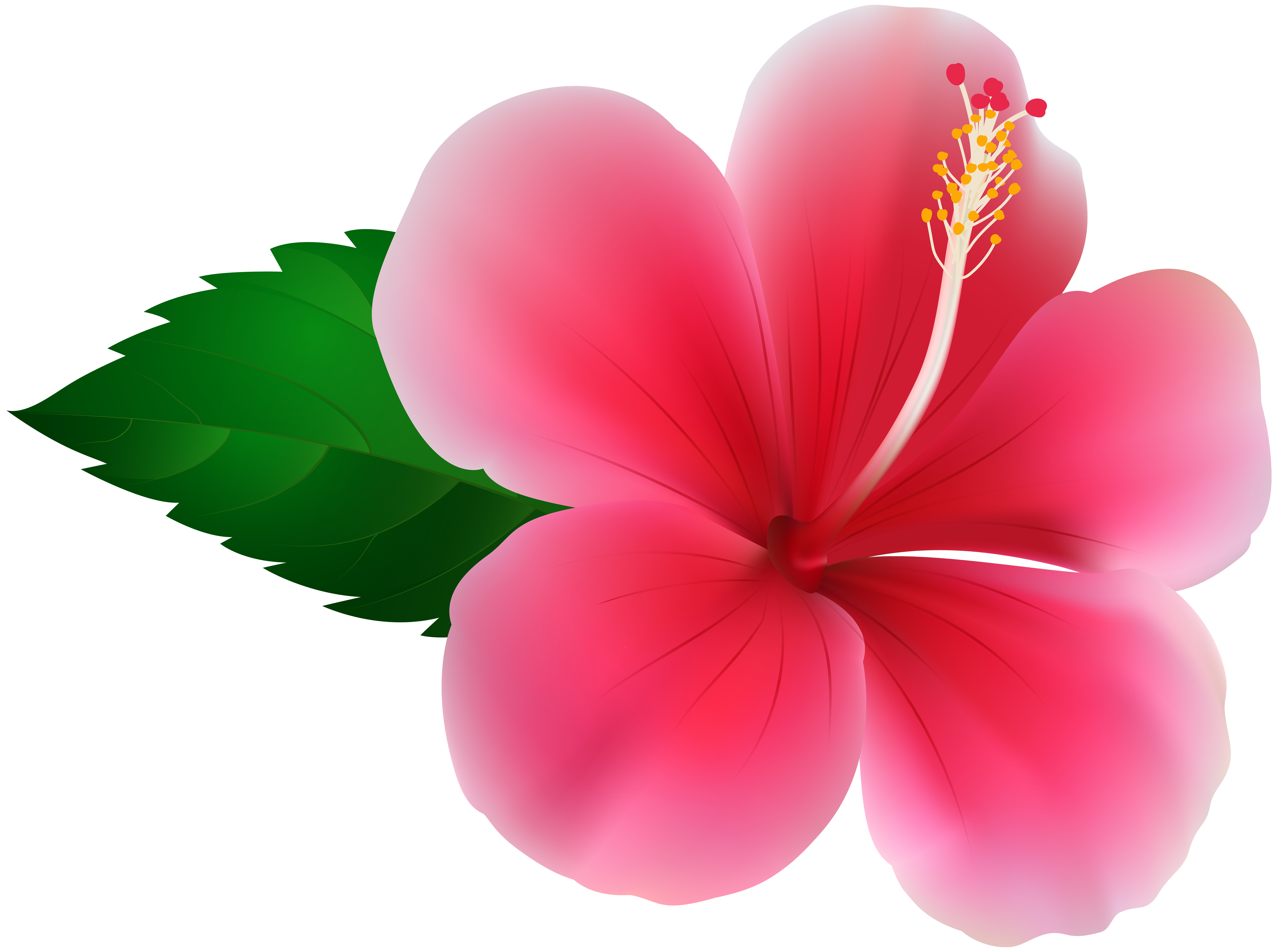 Hibiscus flower png. Pink clip art image