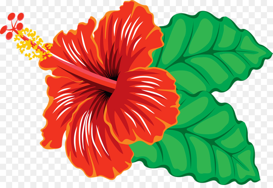 Hawaiian flower transparent clip. Hibiscus clipart
