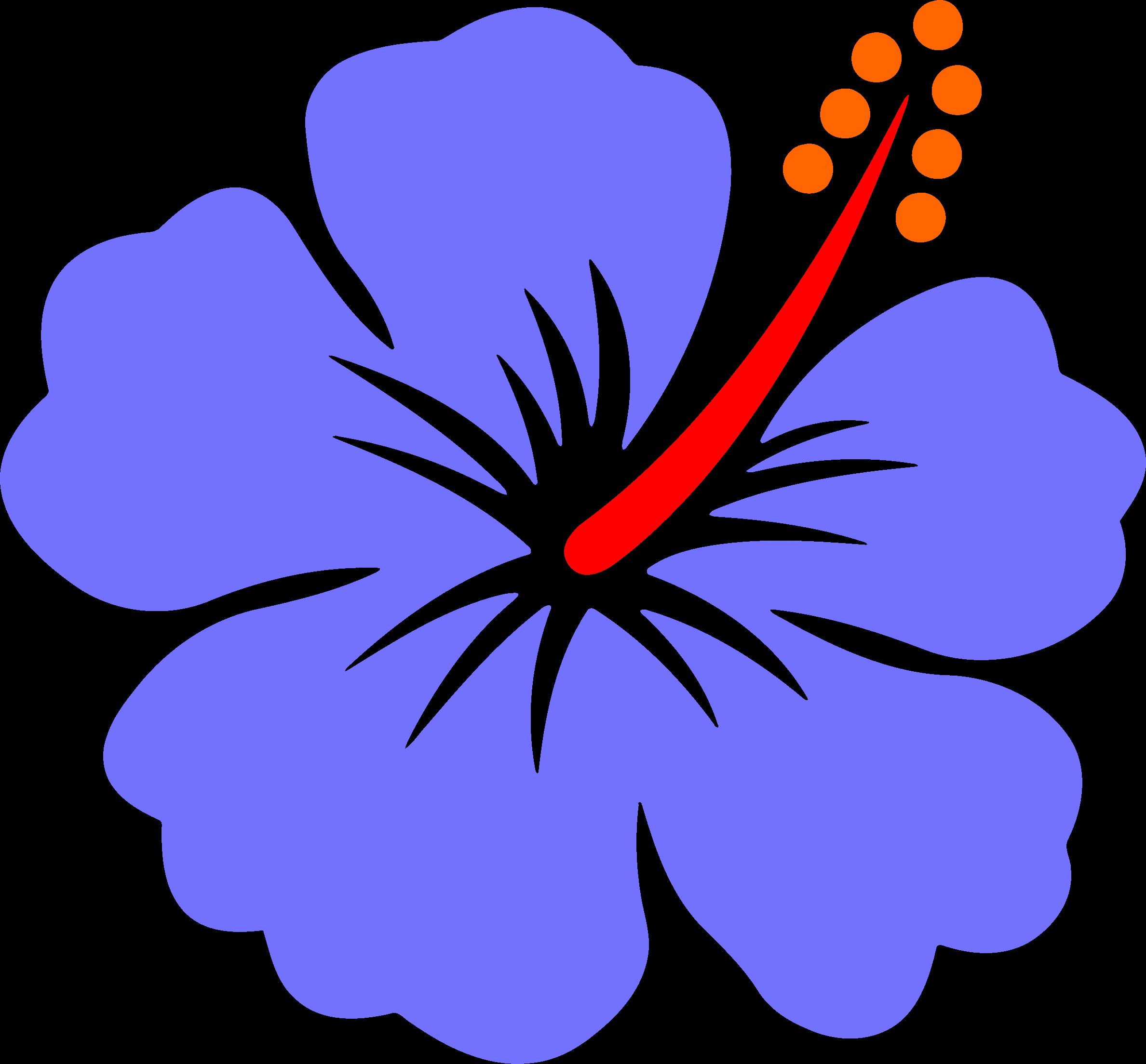 Hibiscus big flower
