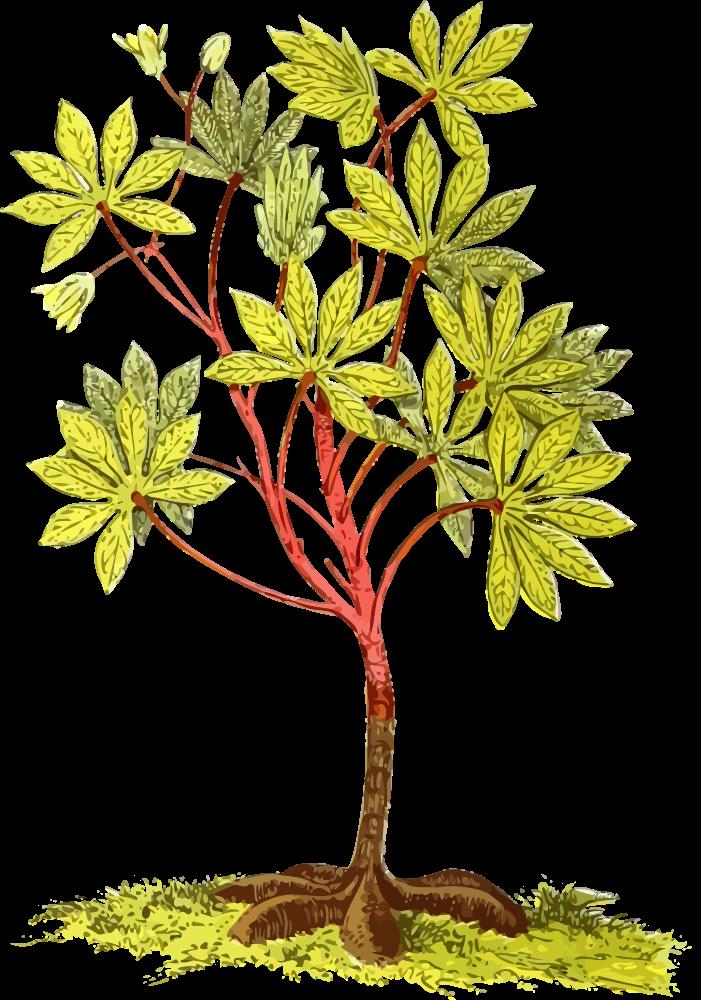 Roots stem plant