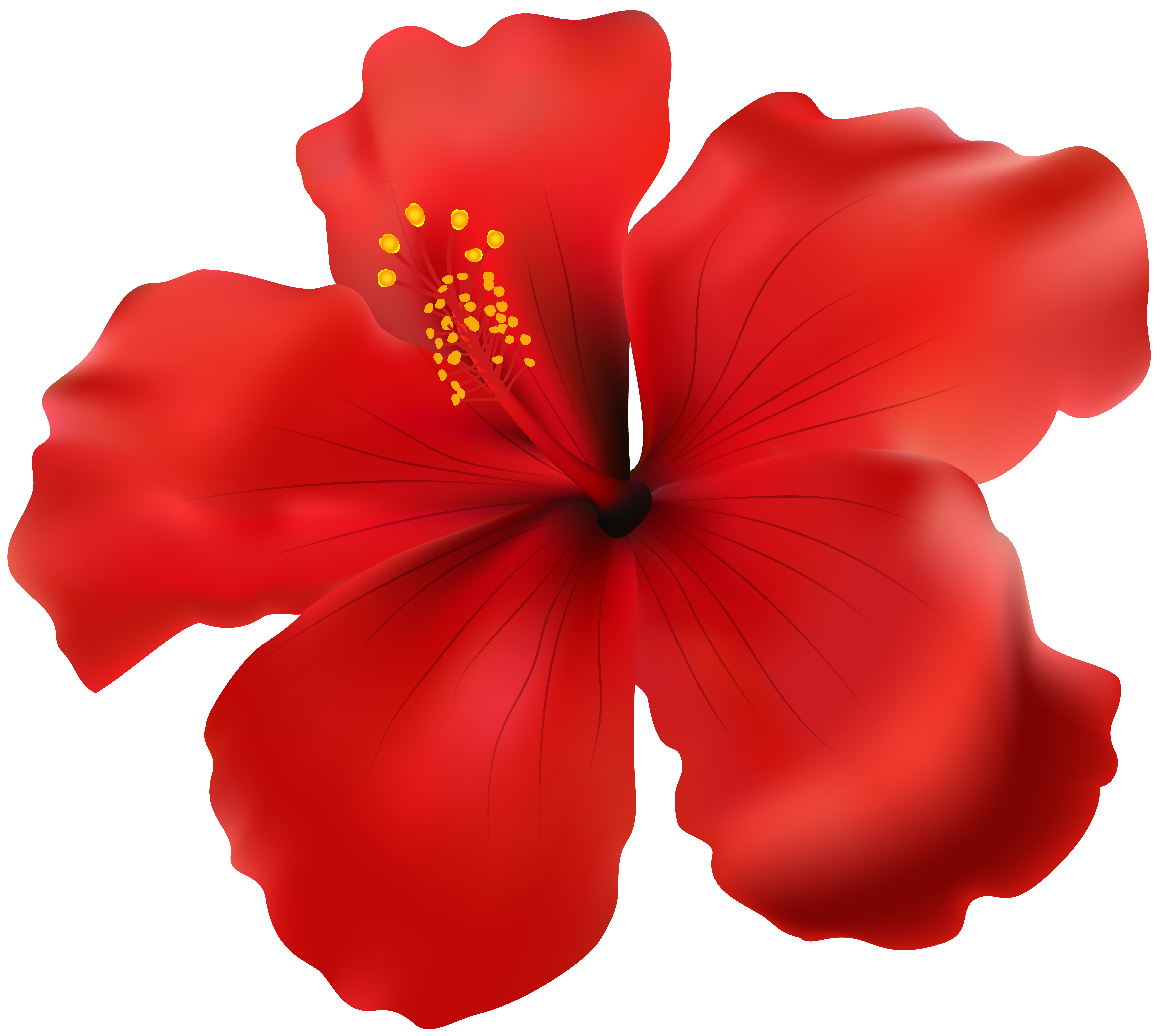 Red transparent png clip. Hibiscus clipart christmas