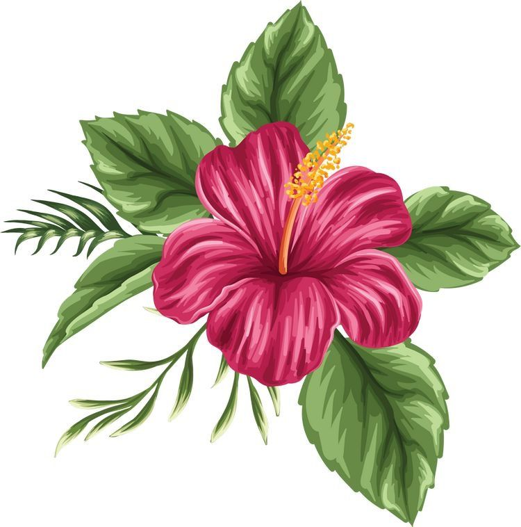 The beauty in art. Hibiscus clipart colorful flower