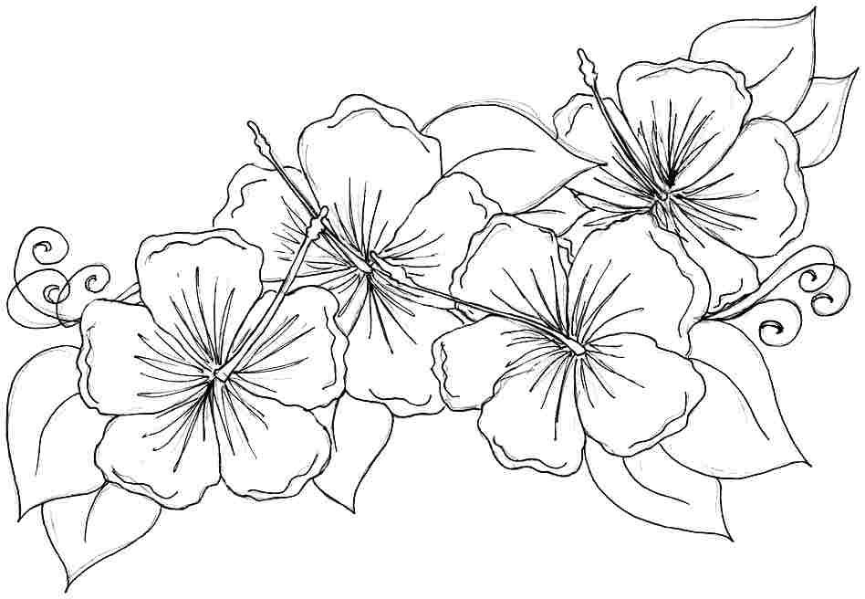 Hibiscus clipart colouring. Coloring pages download free