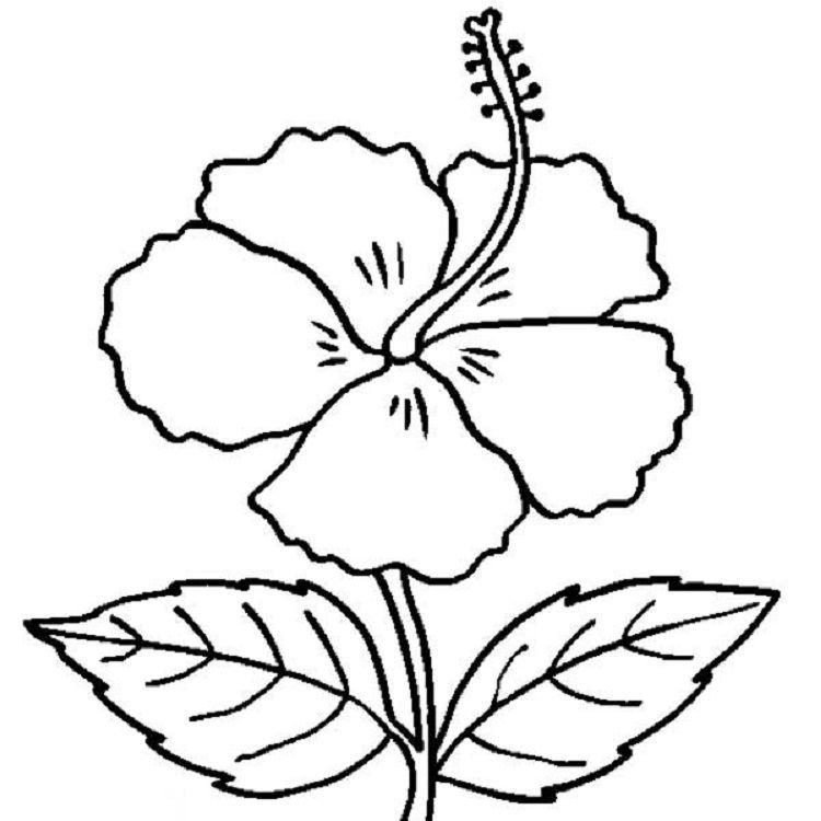 Free flower coloring pages. Hibiscus clipart colouring