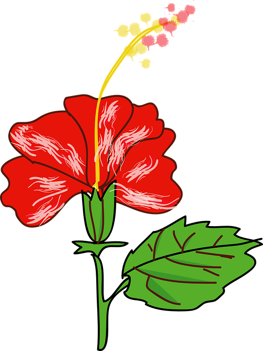Cliparts shop of library. Hibiscus clipart cute
