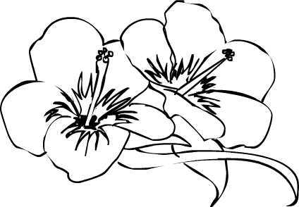Line drawing free download. Hibiscus clipart drawn flower