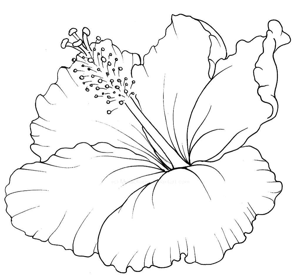 Hibiscus clipart drawn flower. Hawaiian floral drawing