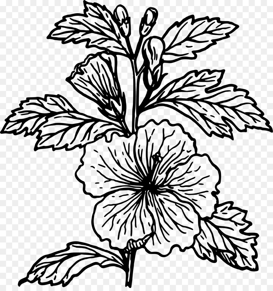 Black and white png. Hibiscus clipart drawn flower