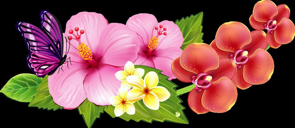 Hibiscus flower bali