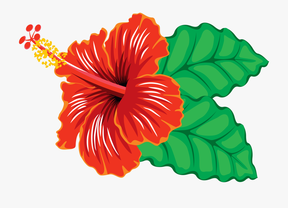 Hibiscus clipart flower real. Free