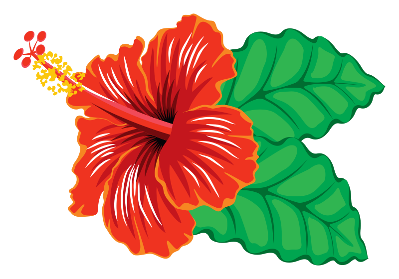 Hibiscus clipart flower samoan.  collection of high
