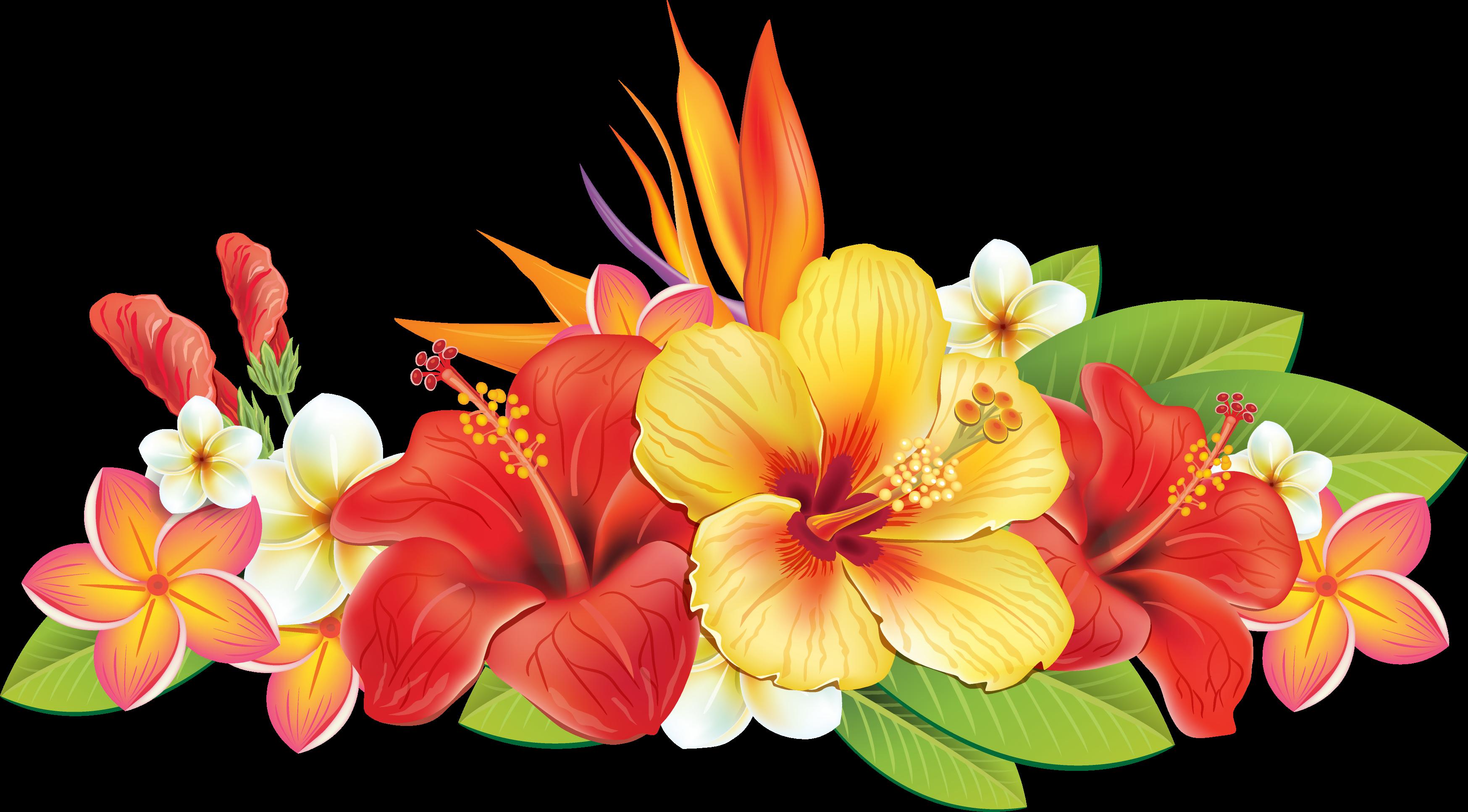 cc c b. Hibiscus clipart garland