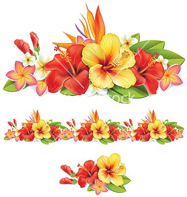 Of tropical flowers vector. Hibiscus clipart garland