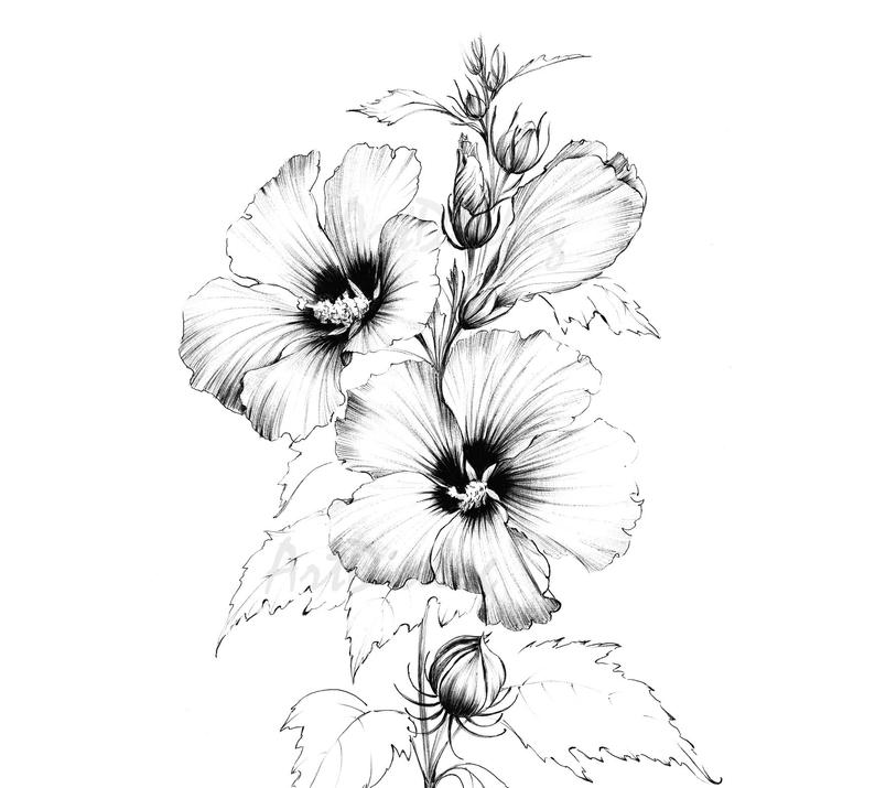 Hibiscus clipart hand drawn. Sketch line drawing large