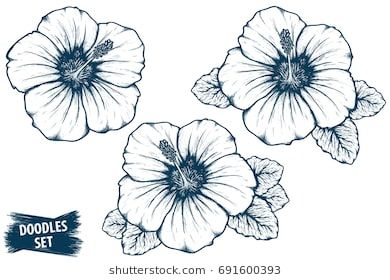 Flower sketch tropical plant. Hibiscus clipart hand drawn