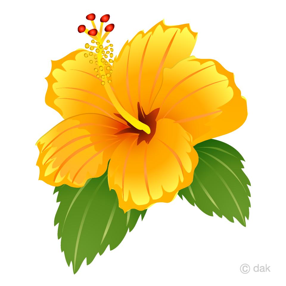 Yellow free picture illustoon. Hibiscus clipart hybiscus