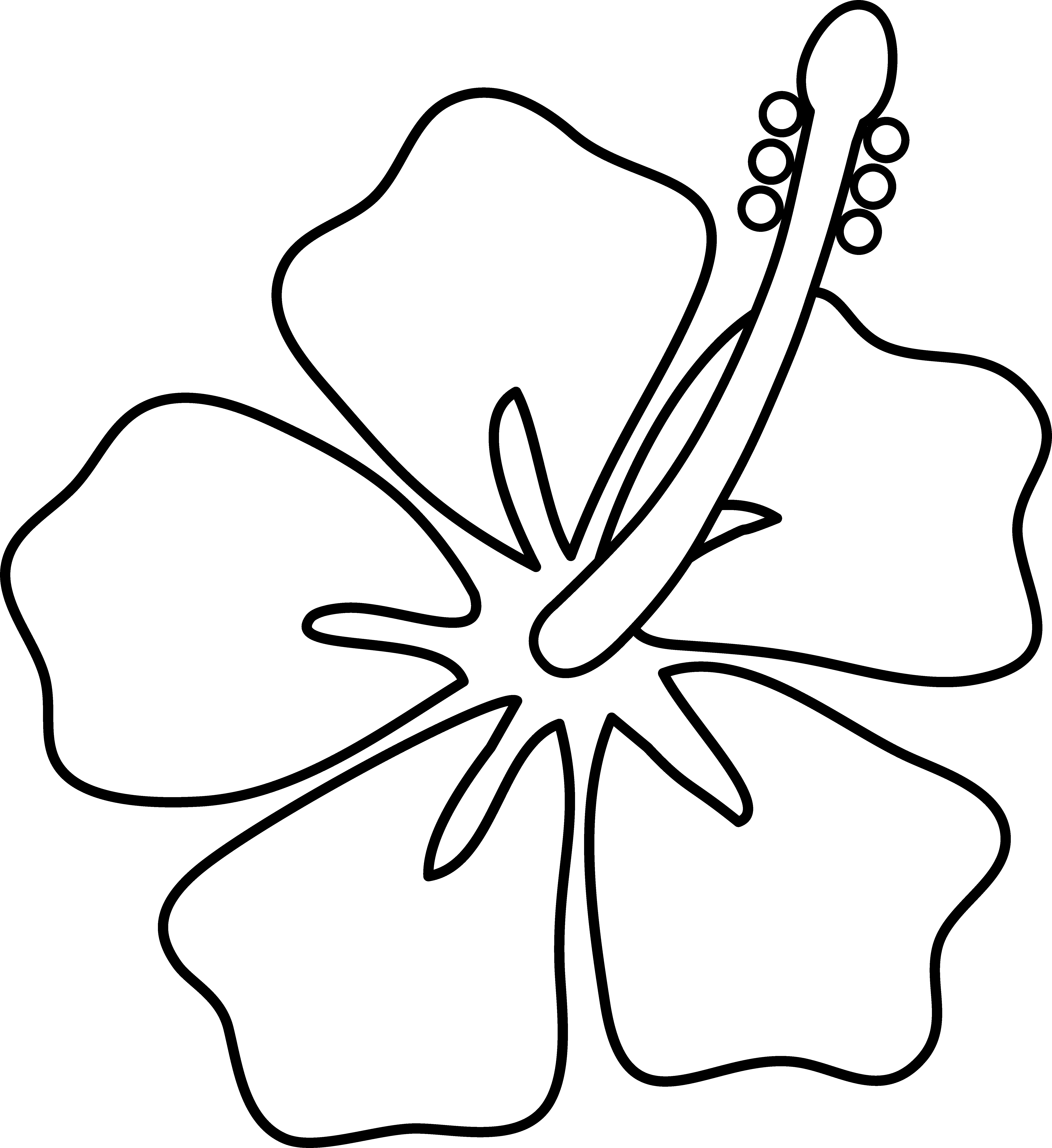 Flower free clip outline. Hibiscus clipart line art