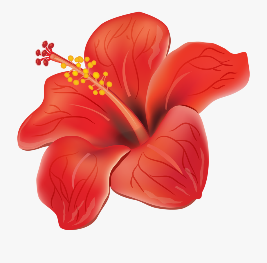 Puerto rico flower flores. Hibiscus clipart moana