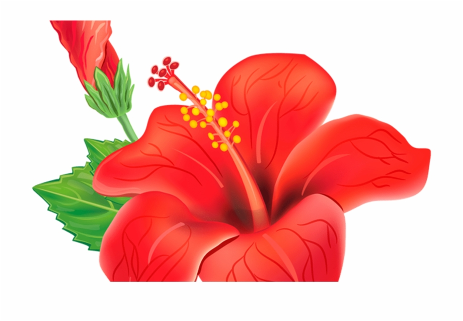 Hibiscus clipart moana. Flower png illustration free