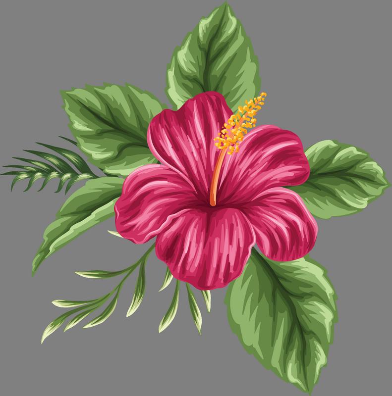 Image du blog zezete. Hibiscus clipart moana