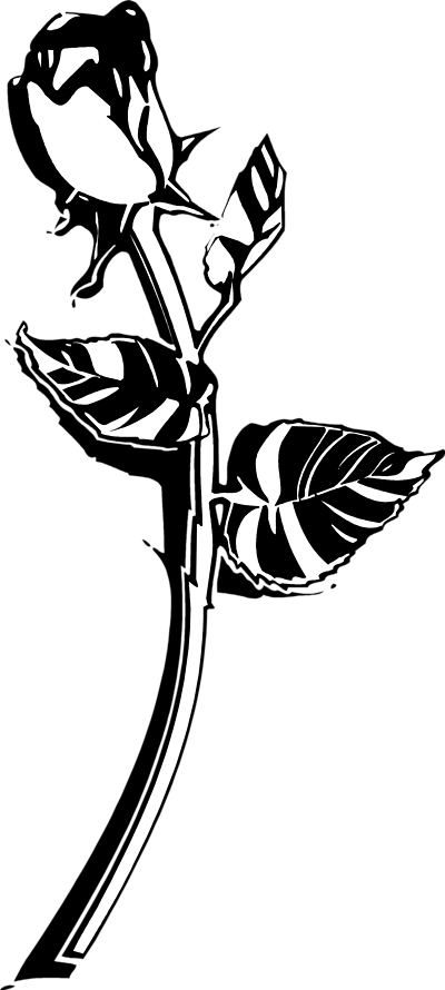 Flower stem black and. Hibiscus clipart phool
