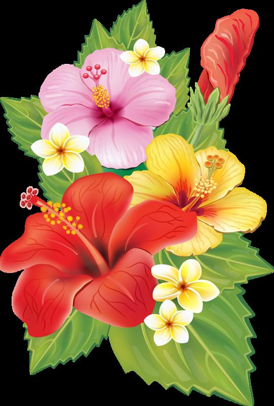 Hibiscus clipart plumeria.  cc ca da
