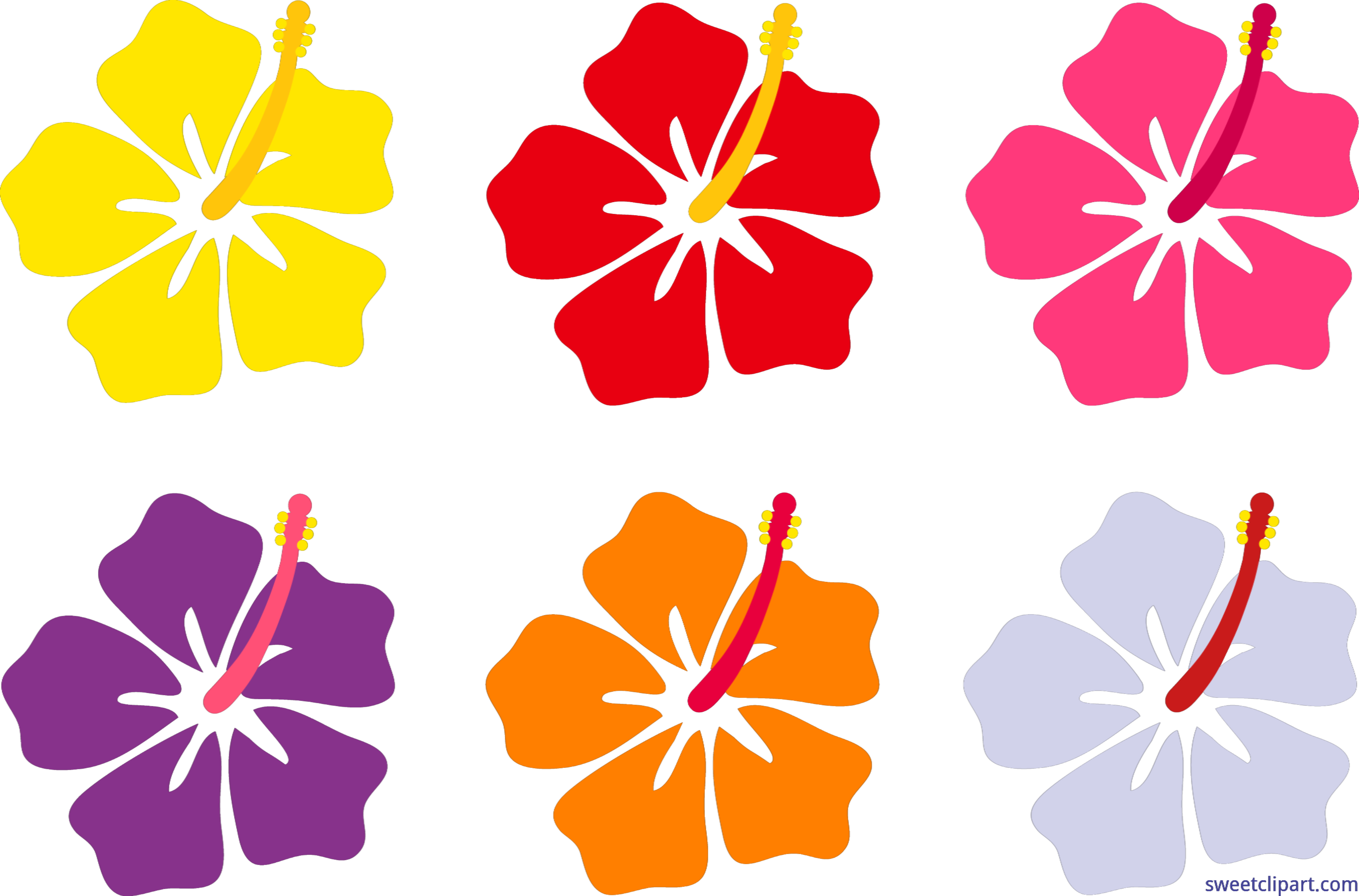 Flowers set clip art. Hibiscus clipart real