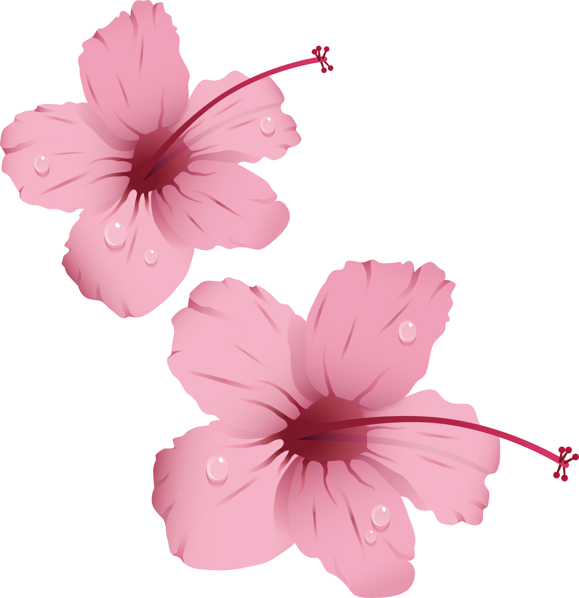 Pink flowers clip art. Hibiscus clipart rose china