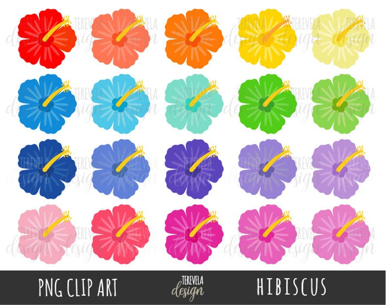 Hibiscus clipart tropical flower.  sale flowers summer