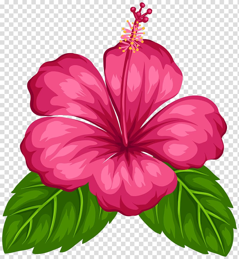 Hibiscus clipart tropical flower. Free download pink good