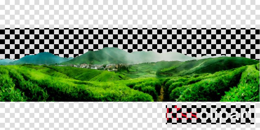 Hill clipart natural vegetation. Green grass background nature