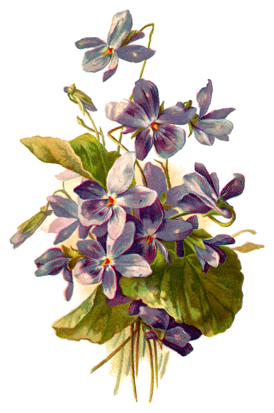 Flower illustration png. Forget me not flowers