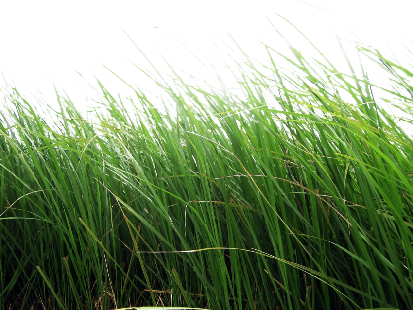 Png free images toppng. Hills clipart patch grass