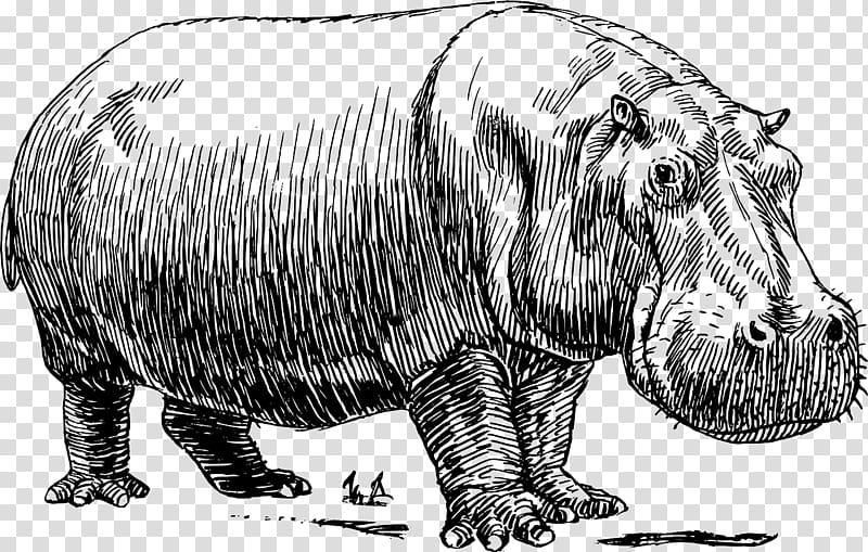 Black and white transparent. Hippo clipart hippopotamus