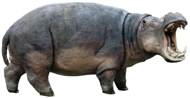 Hippopotamus clipart transparent background. Png images all picture