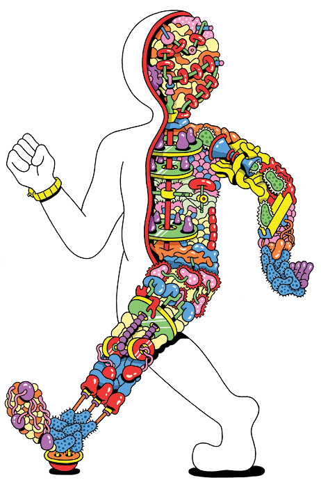 Gutsy the gut microbiome. History clipart museum natural history