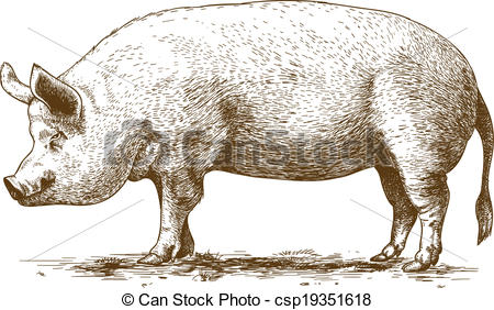 Hog clipart. Collection illustrations and royalty