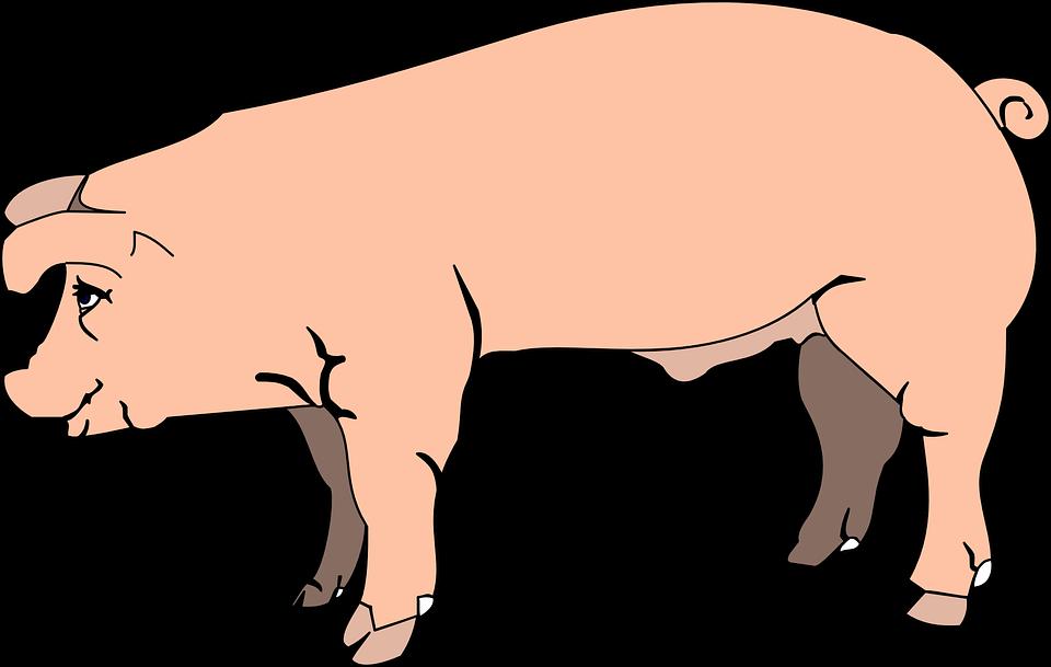 Pigs clipart printable. Farm pig free royalty