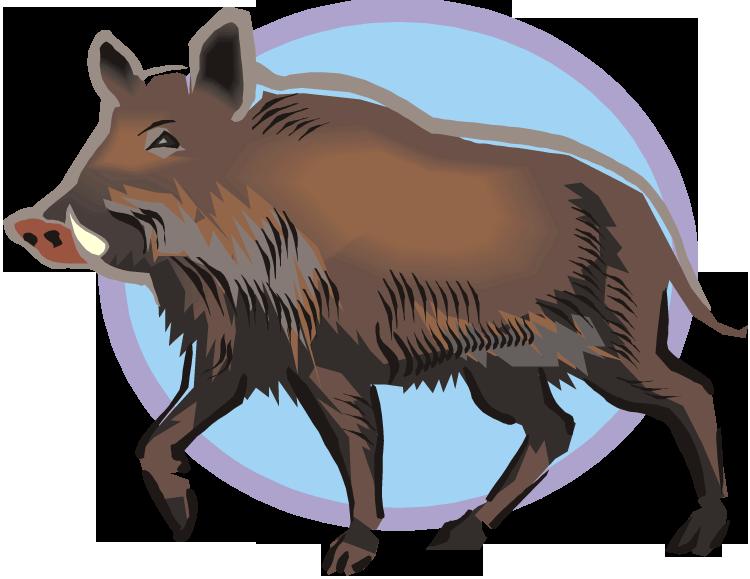 hog clipart common animal
