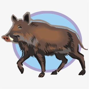 Wild boar clip art. Hog clipart male pig