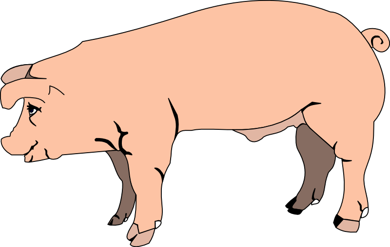 Pig clipart clear background. Line art image group