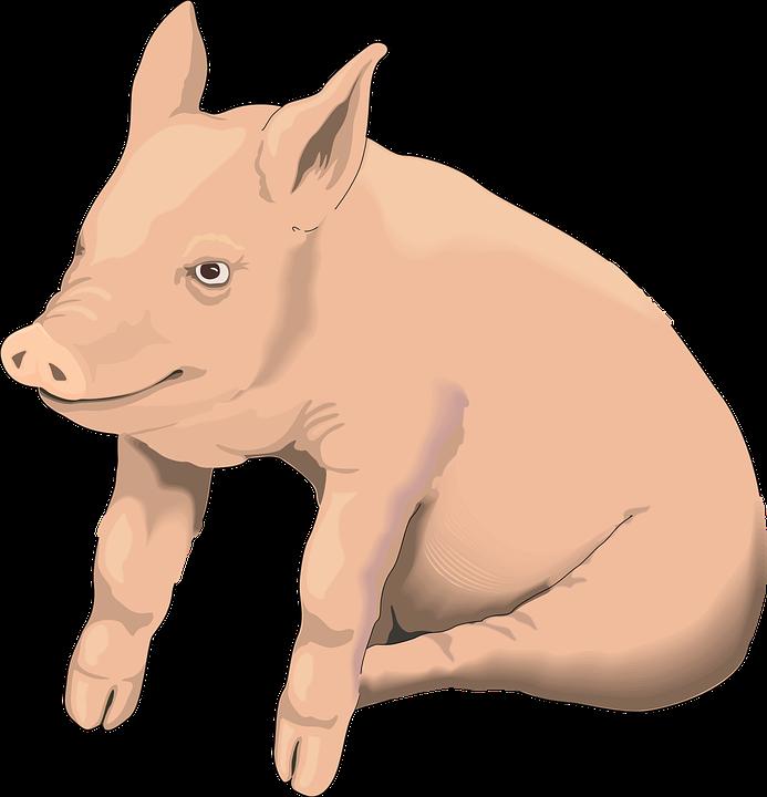 Hog clipart pog. Pig vector free group
