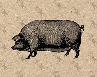 Etsy . Hog clipart pog